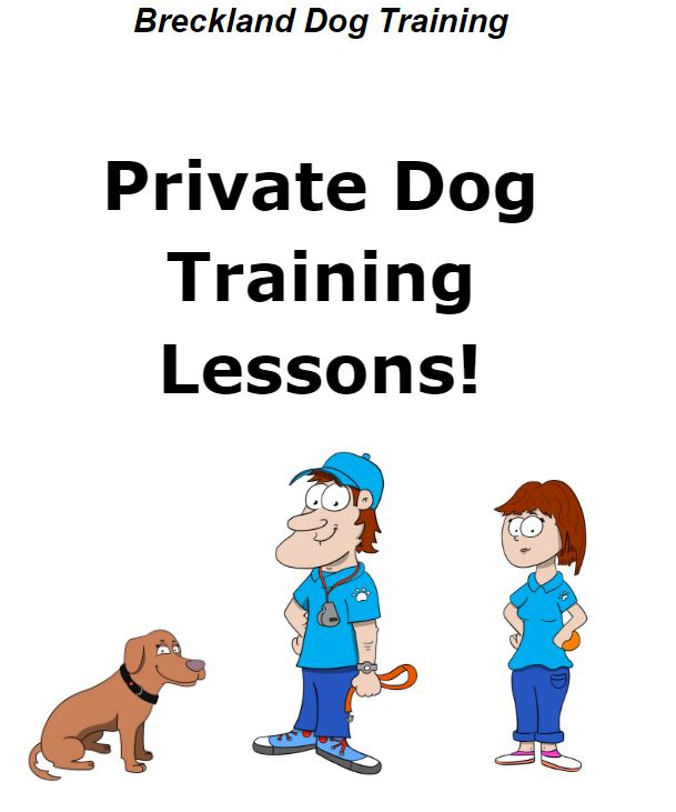 121 Private Dog Training Lesson