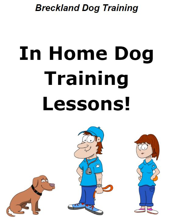 121 Private IN HOME Dog Training Lessons