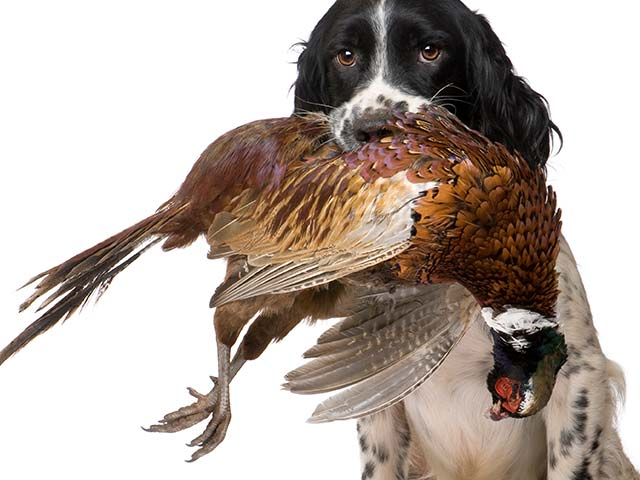 Gundog Training Courses