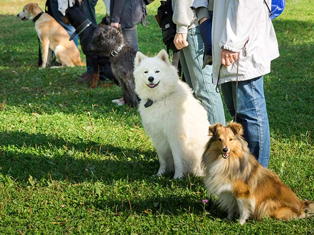 Group Dog Training