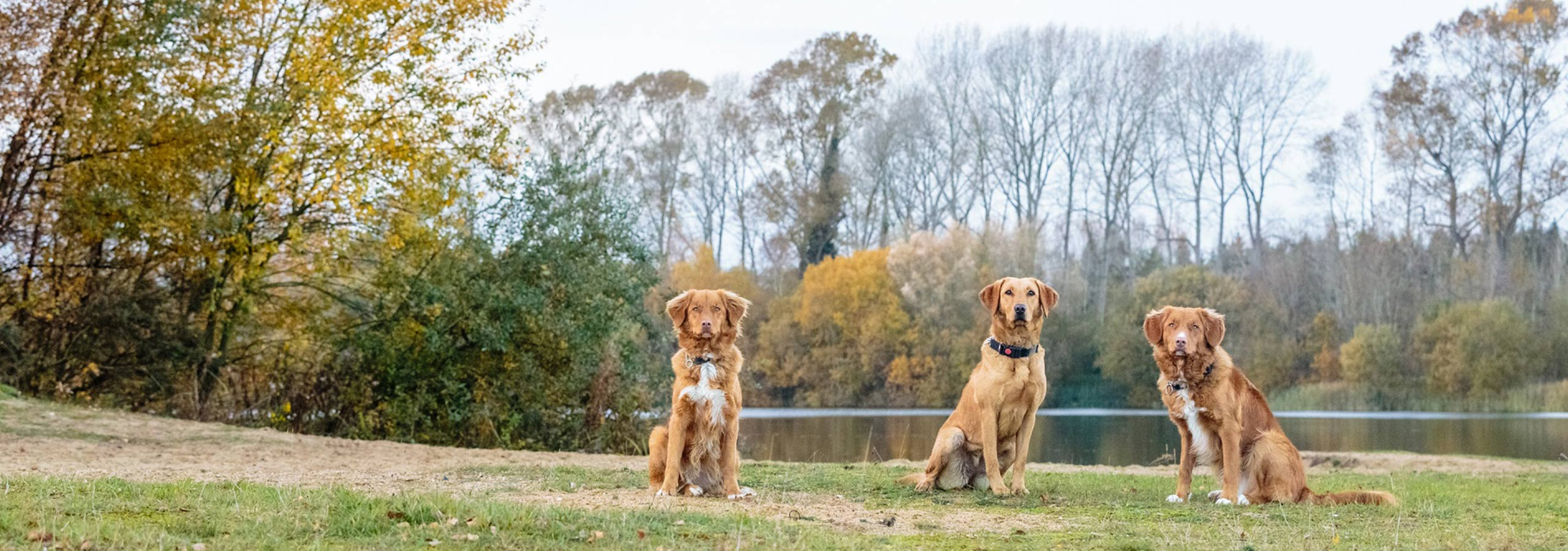 About Breckland Dog Training